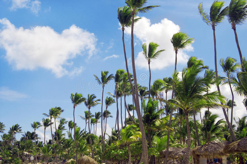 Download Palm Trees In Front Of Azure Skyline. Stock Image - Image: 24113117