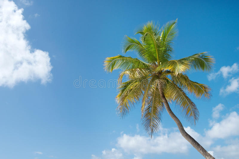 Download Palm Trees In Front Of Azure Skyline. Royalty Free Stock Photography - Image: 25105037