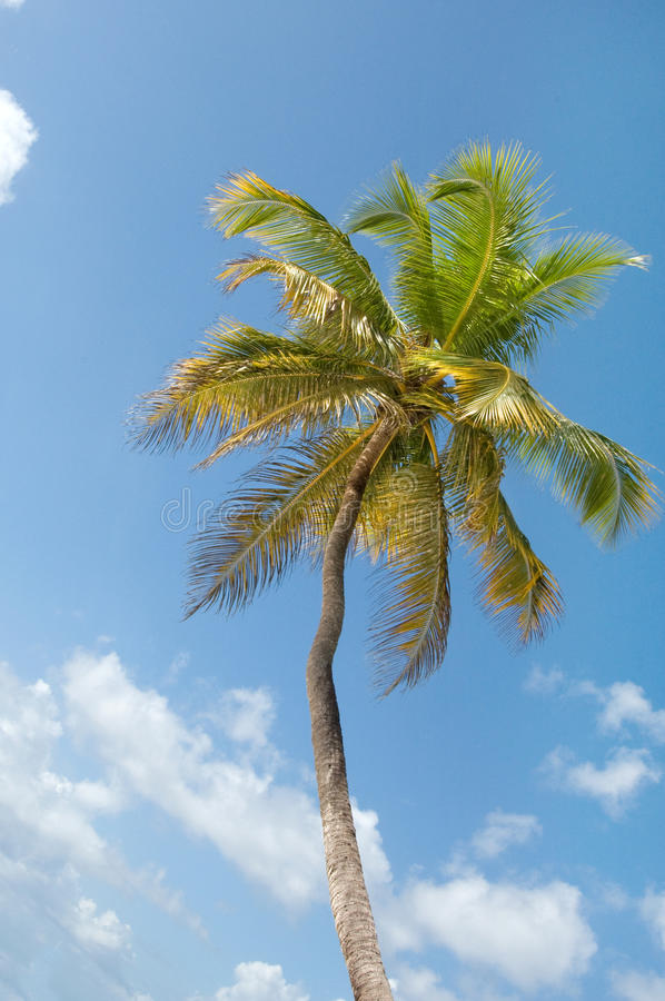 Download Palm Trees In Front Of Azure Skyline. Stock Image - Image: 25105111