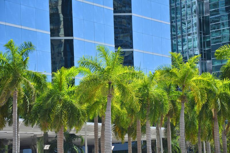Palm trees in front of modern skyscraper in Miami royalty free stock photo
