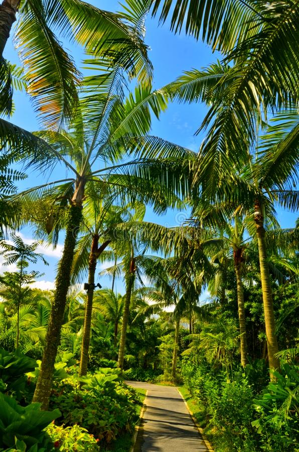 Palm Trees, Gardens by the Bay, Singapore royalty free stock images