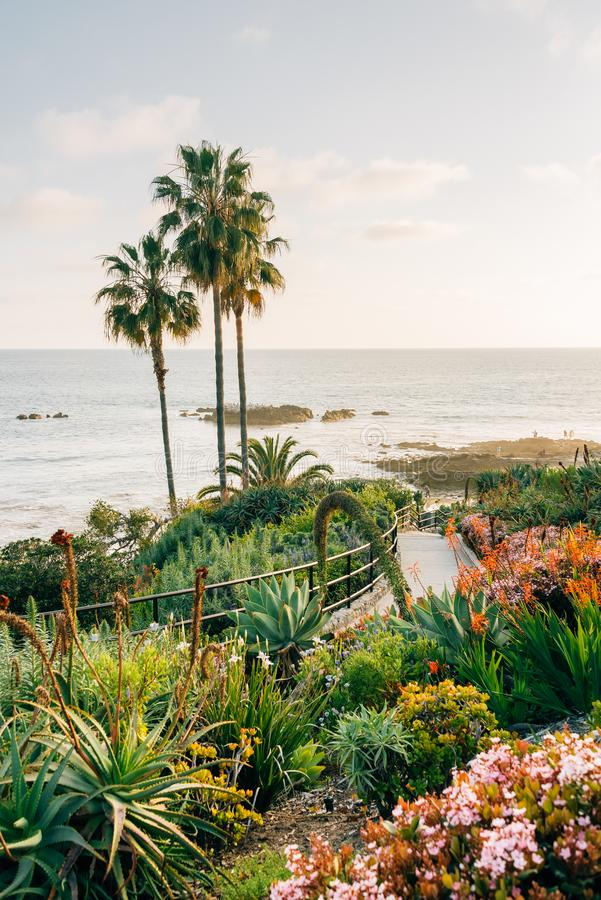 Palm trees and gardens at Heisler Park, in Laguna Beach, Orange County, California.  royalty free stock photography