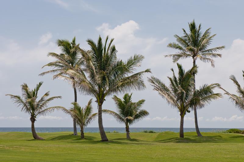 Download Palm trees on golf course stock image. Image of tropics - 10126817