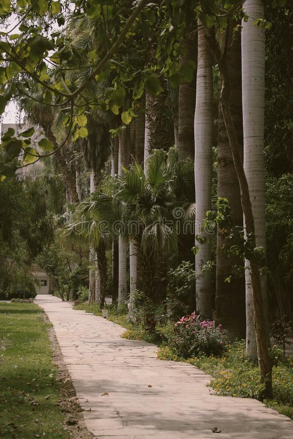 Palm Trees Beside Gray Paved Pathway royalty free stock images