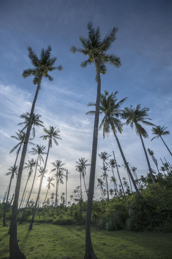 Palm trees with green field and bushes over blue sky with clouds during beautiful summer day stock photography