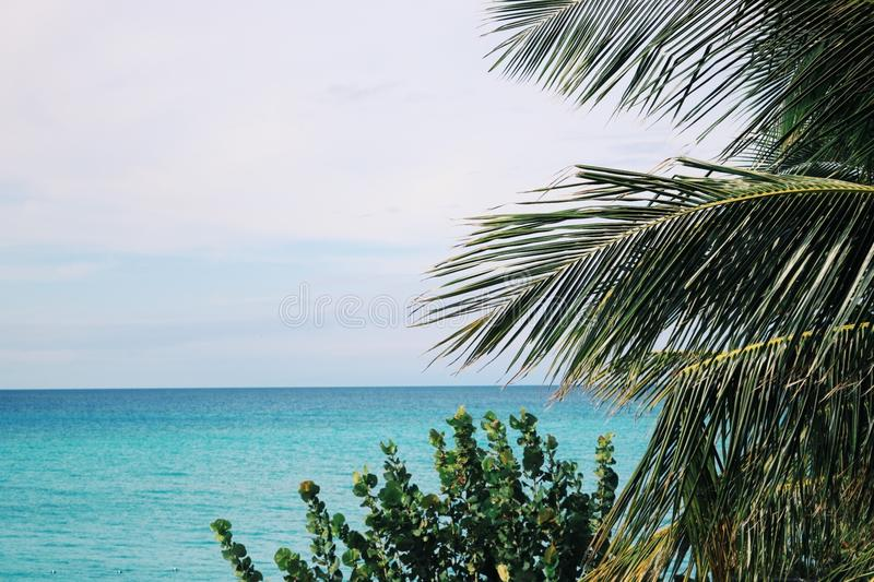 Palm Trees and Green Leaf Plant Near Body of Water royalty free stock photography
