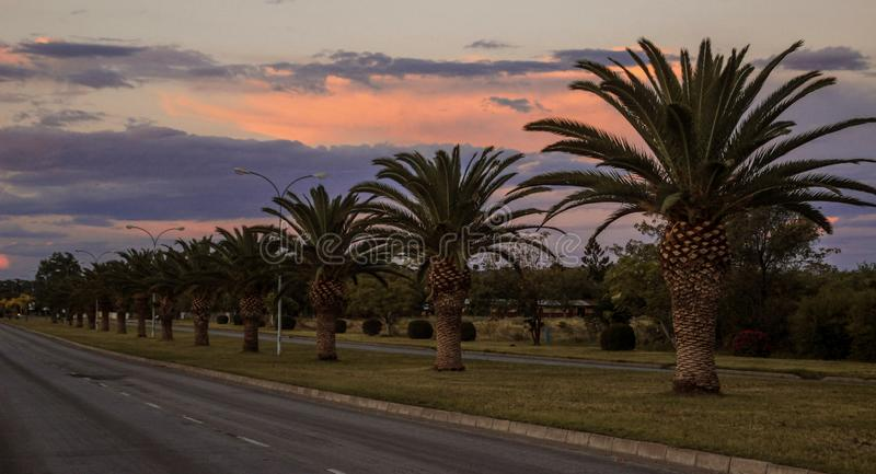 Palm trees grow along the road at sunset stock photo