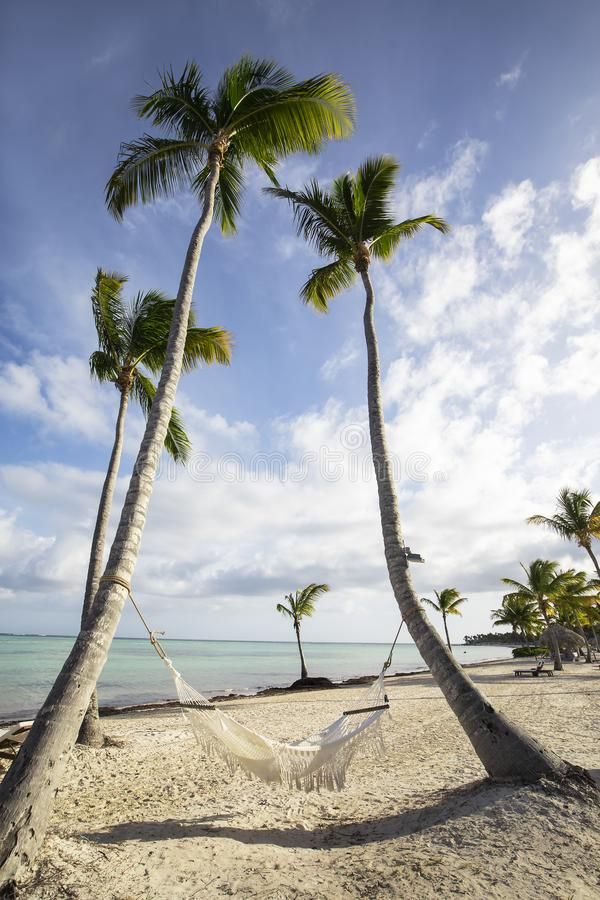 Palm trees with hammock on beach in the Caribbean against blue sky with white clouds. stock image