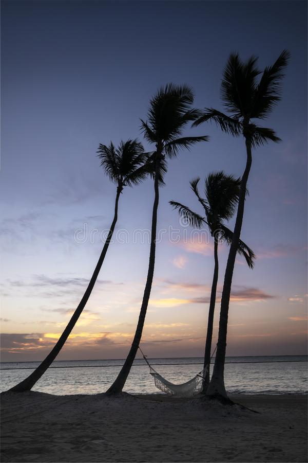 Palm trees and hammock on beach in the Caribbean at sunrise. stock photo