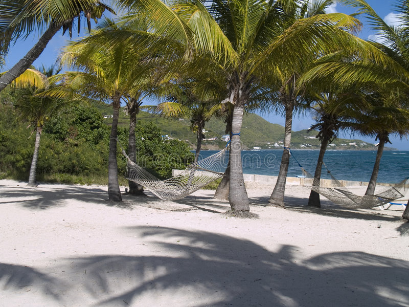 Download Palm Trees and Hammocks stock image. Image of beachfront - 2131607