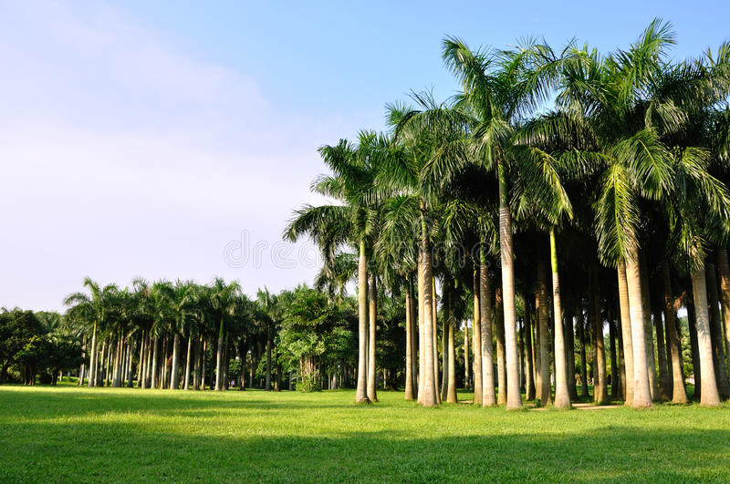 Download Palm Trees Horizontally In Vast Stock Photo - Image: 10647228