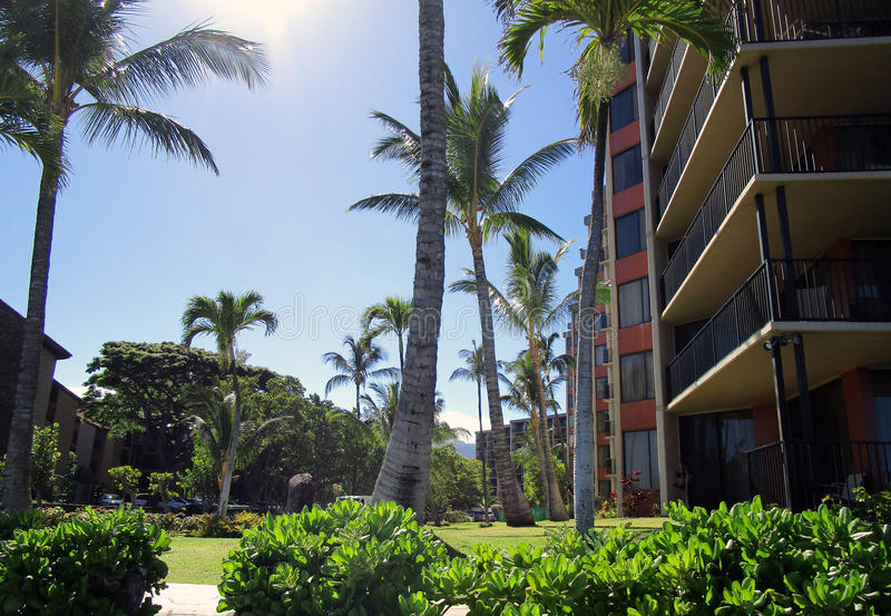 Palm Trees by Hotels. In Maui Hawaii royalty free stock photos
