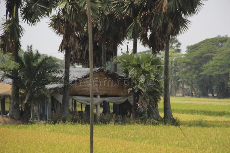 Palm trees and huts in Sundarbans national park, famous for Royal Bengal Tiger royalty free stock photos