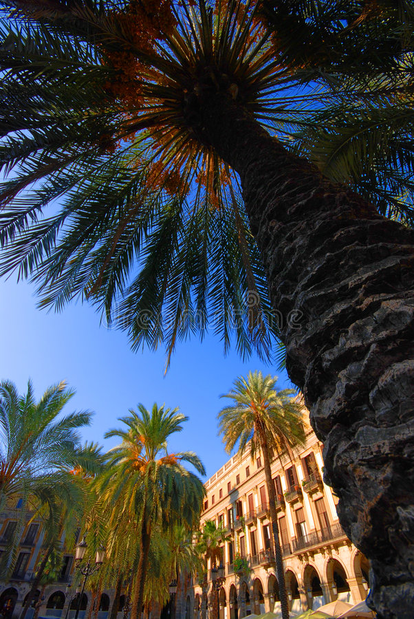 Free Palm Trees In Barcelona Plaza Royalty Free Stock Photo - 3583685