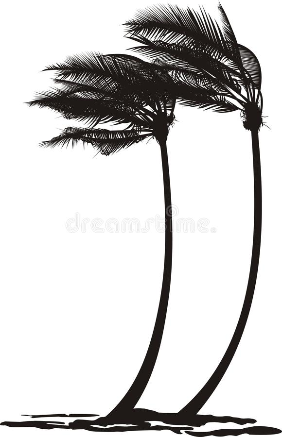 Free Palm Trees In The Wind Stock Images - 29261654