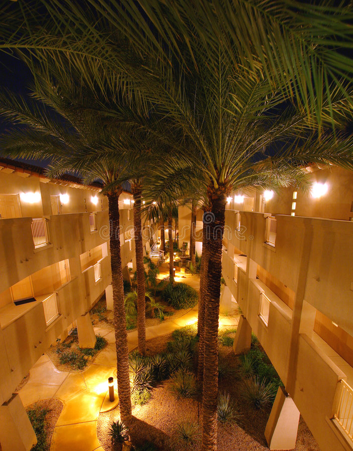 Palm trees in the inner courtyard. By night stock images