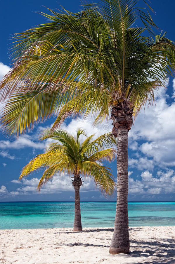 Download Palm Trees stock image. Image of cloud, pleasure, blue - 31490267
