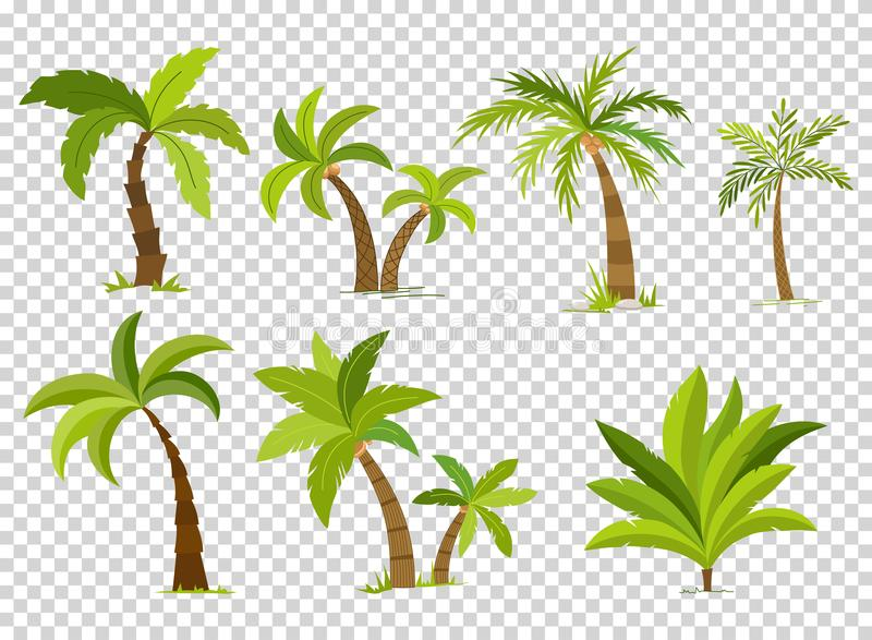 Palm trees isolated on transparent background. Beautiful vectro palma tree set vector illustration.  royalty free illustration