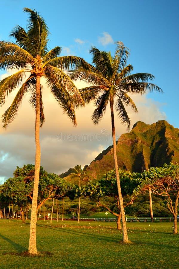 Palm trees and jagged mountains. Palm Trees Frame Jagged Mountains at Kualoa Park on Oahu Island stock photography