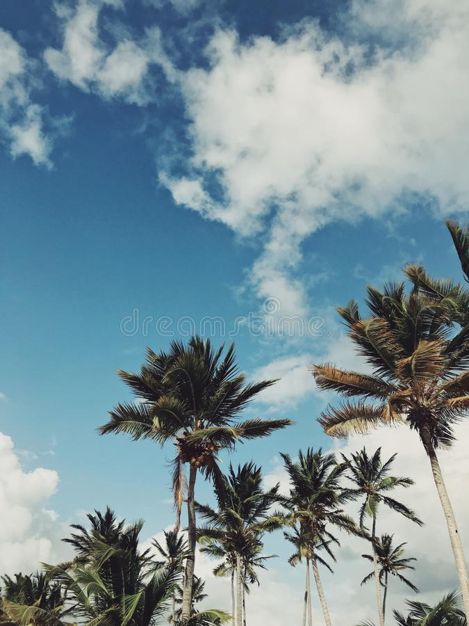 Palm trees of Juanillo beach under heavy sky. With clouds and sun in stormy weather in Dominican republic. Photo is vintage with saturated colors royalty free stock image