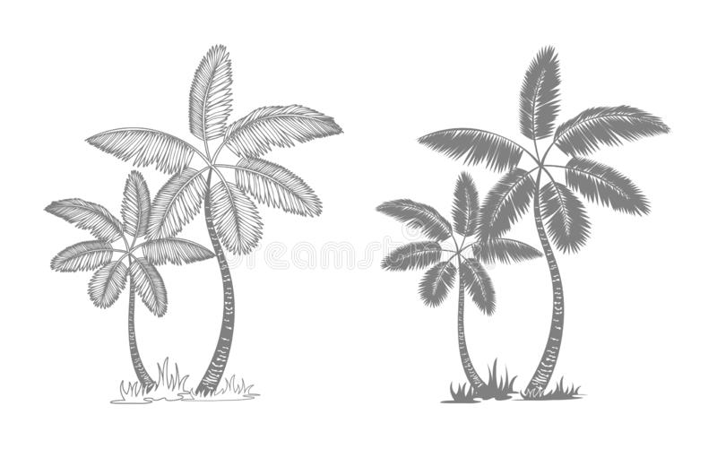 Palm trees and leaves. Black line silhouette isolated on white background. Vector sketch illustration royalty free illustration