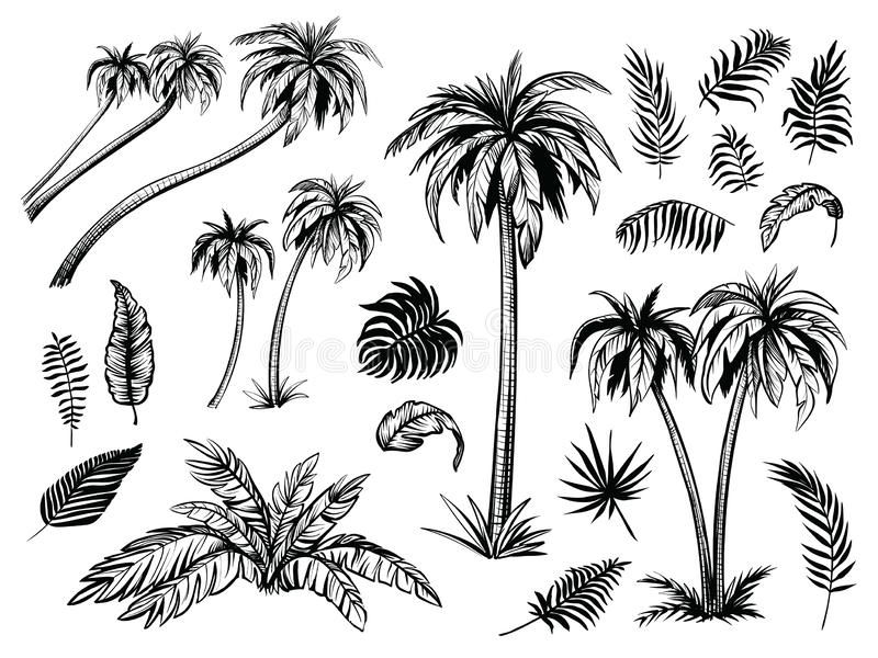 Palm trees and leaves. Black line silhouettes. Vector sketch illustration. royalty free illustration