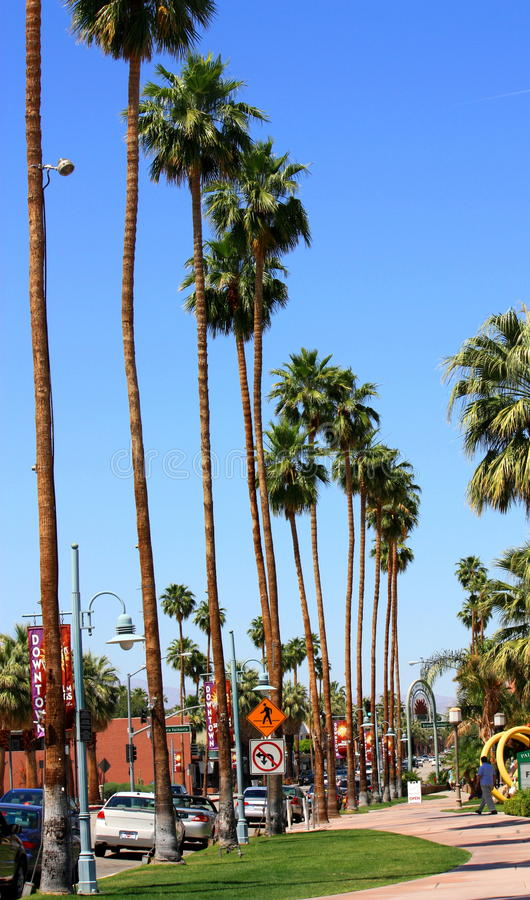 Palm Trees In Line. A line of palm trees on one side of the street stock photos