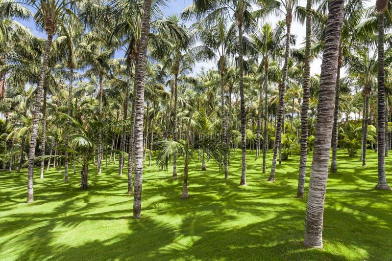 Palm trees in Loro Parque. Spain. Tenerife. View of palm trees in Loro Parque. Spain. Tenerife stock photo