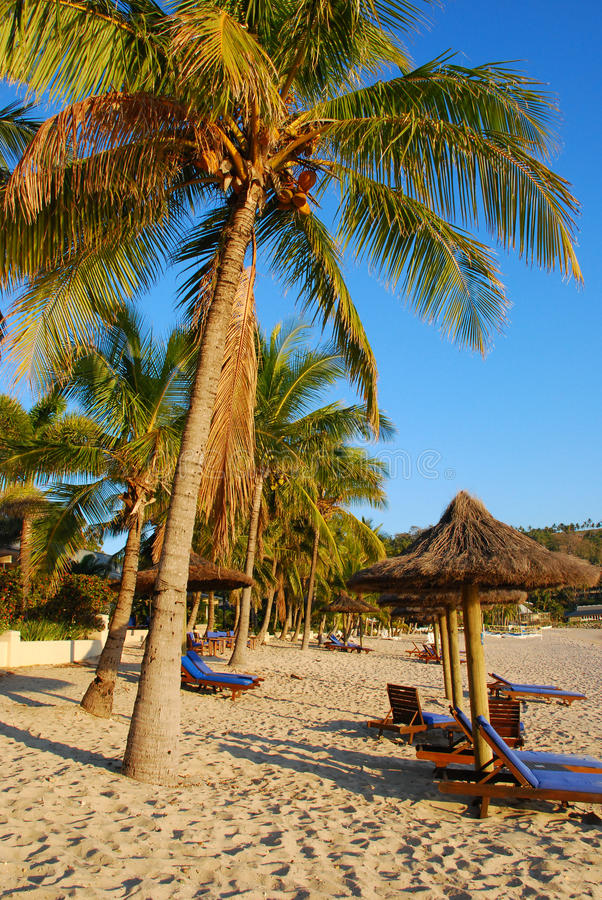 Palm trees on luxury exotic beach stock images