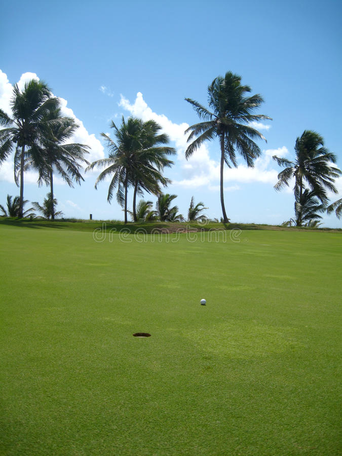Palm Trees On Luxury Golf Course Stock Photography