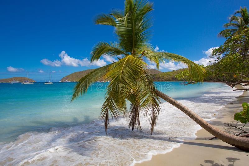 Palm trees Maho Beach on St John in the US Virgin Islands stock image