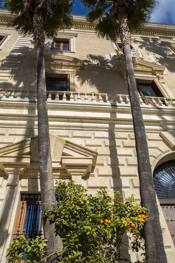 Palm trees in Malaga. Palm trees and orange trees stock photos
