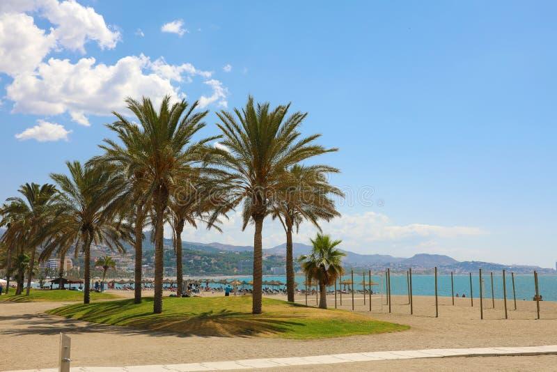 Palm trees on the Malagueta beach, Malaga, Spain.  royalty free stock image