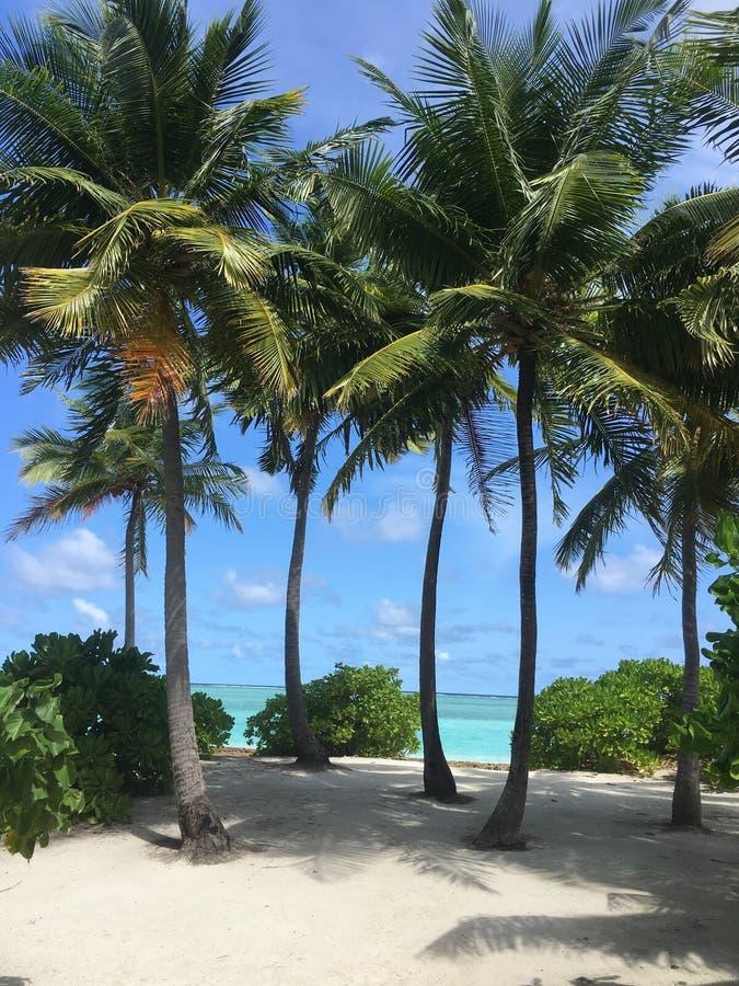 Palm Trees Maldives royalty free stock photos
