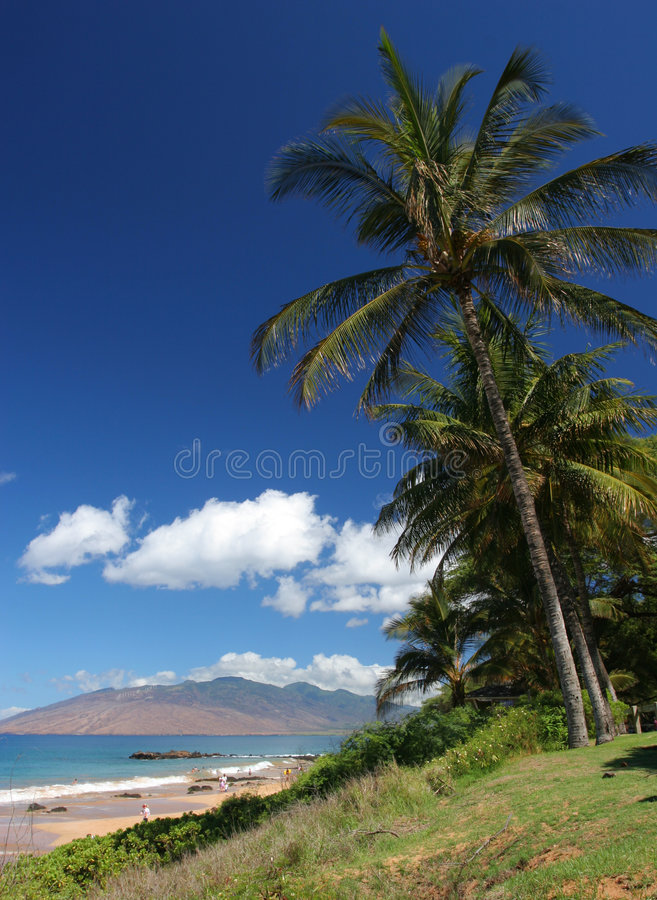 Download Palm Trees in Maui stock image. Image of color, ocean - 3216779