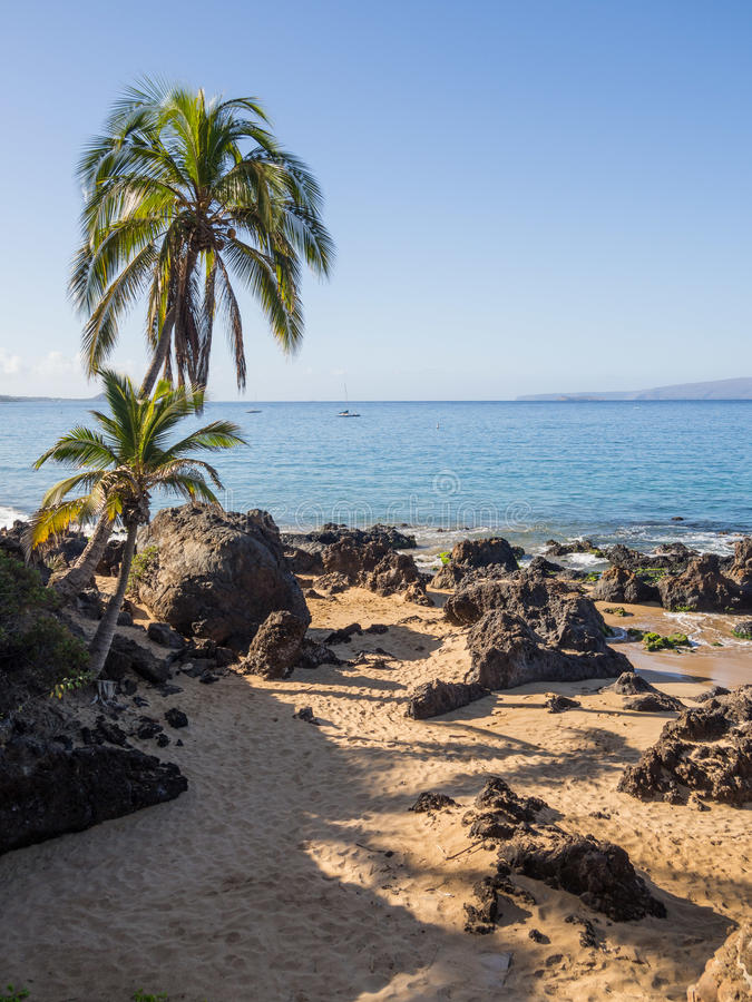 Palm Trees in Maui stock photo