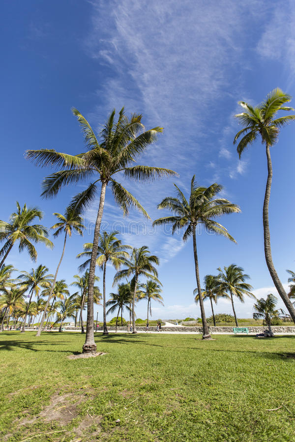 Download Palm Trees Stock Photo - Image: 41294667