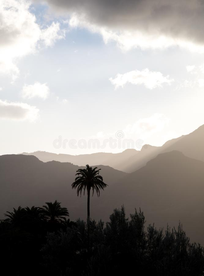 Palm trees and misty mountains in the background, cloudy sky above. Vertical image stock photos