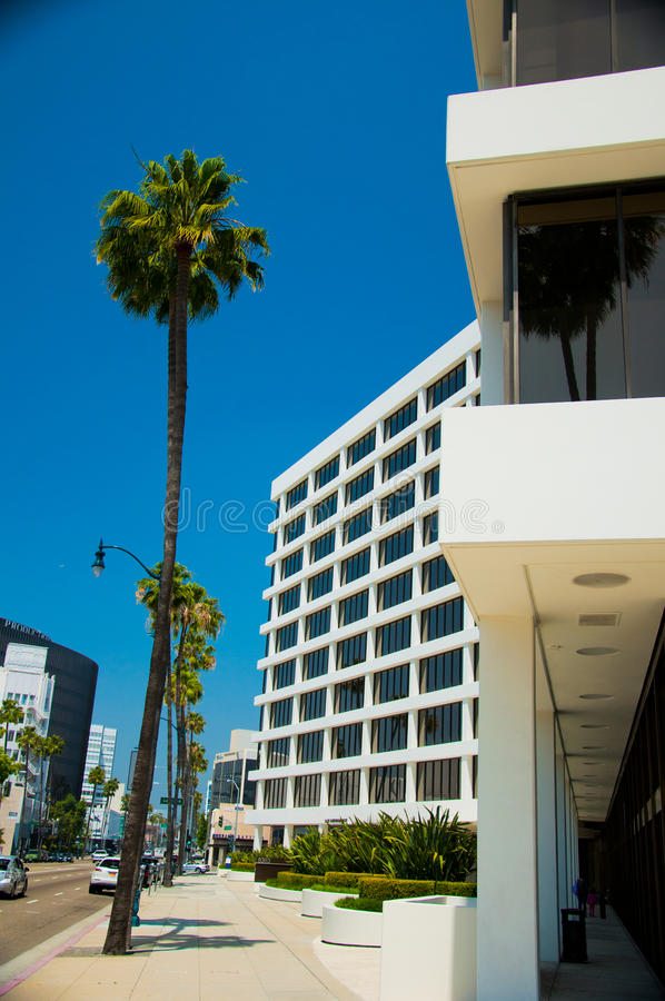 Palm trees and modern architecture