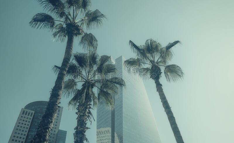 Palm trees and modern buildings in Tel Aviv, ISRAEL.  royalty free stock photography