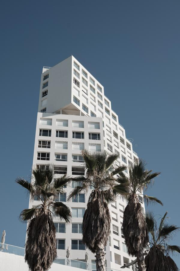 Palm trees and modern buildings in Tel Aviv, ISRAEL.  royalty free stock photos