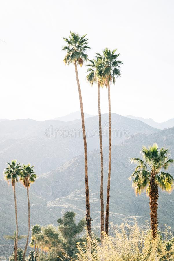 Palm trees and mountains in Palm Springs, California stock photos