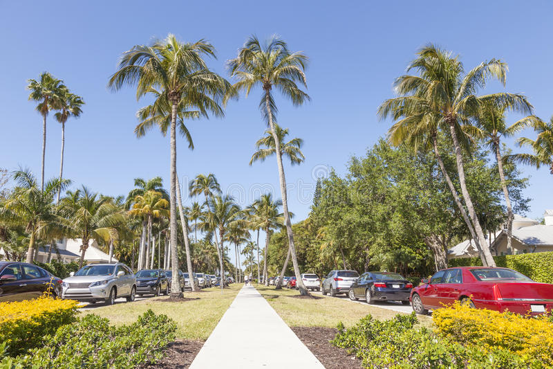 Palm trees in Naples, Florida royalty free stock photos