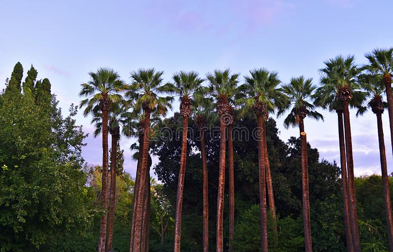 Palm trees in the national garden of Athens, Greece stock image