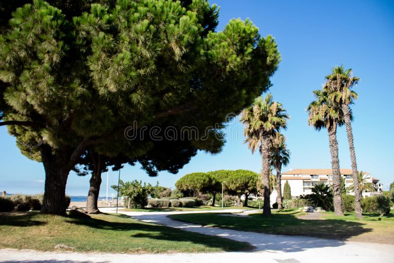 Palm trees near the beach in the south of France stock photos