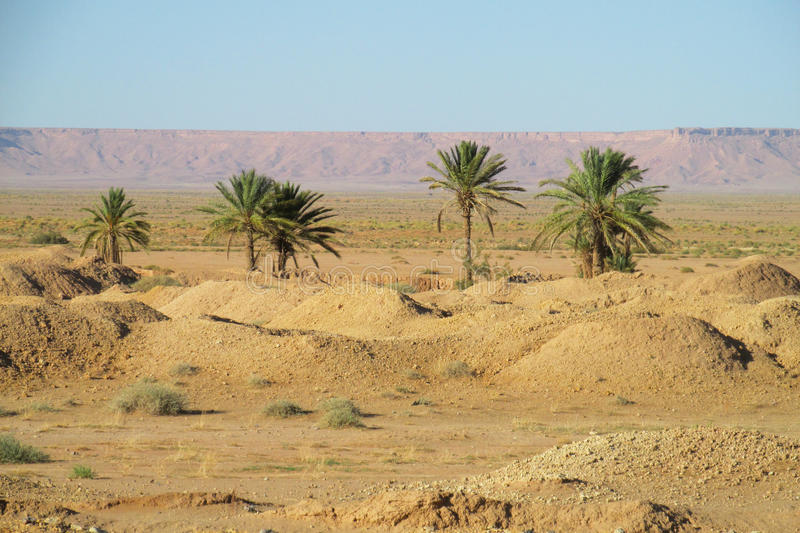 Palm trees oasis in the far. Palm trees in the sand desert, tropical trees, blue sky with clouds, beautiful scenery sunny day. African landscape, Sahara desert stock images