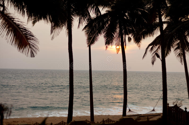 Palm Trees At Ocean Coast With Sand And Wave at sunset stock photo