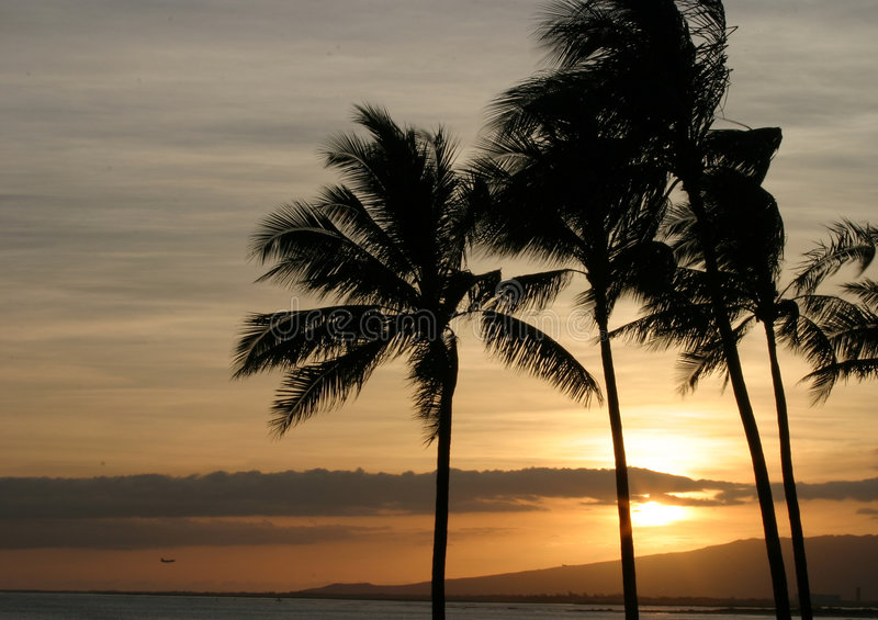 Palm Trees Ocean and Sunset Sky in Hawaii stock image