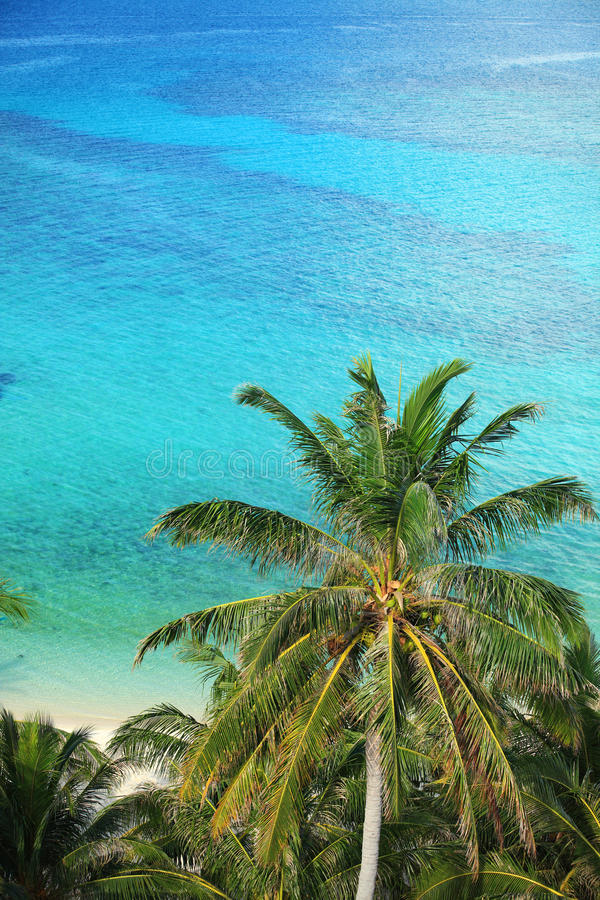 Download Palm trees and ocean stock image. Image of clean, landmark - 31518959