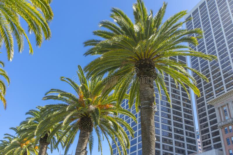 Palm trees and office buildings in San Francisco stock image